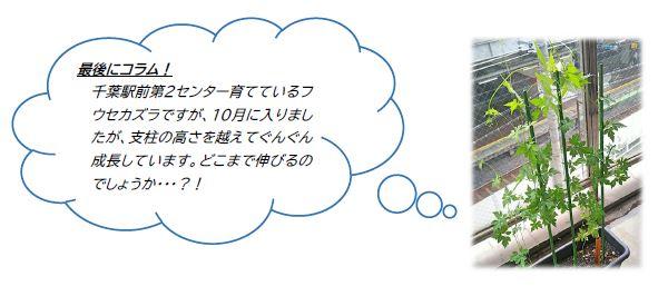 【千葉駅前第2】コラム