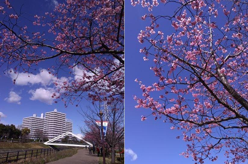 【新横浜】ウォーキング